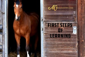First Steps of Learning